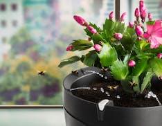 """Parrot Pot è il vaso """"smart"""" che innaffia le piante da solo"""