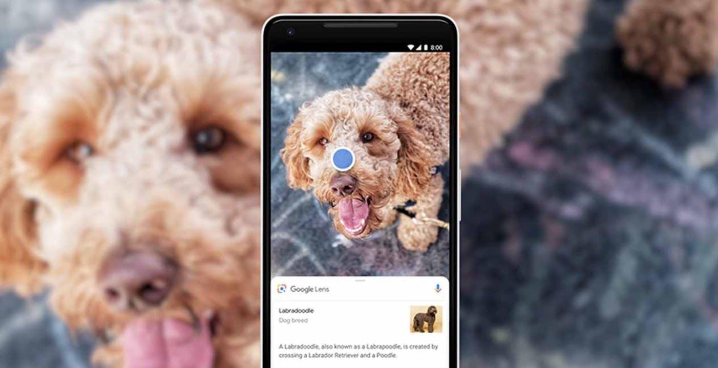Google Lens si aggiorna: arriva il copia incolla del testo dalla carta al PC