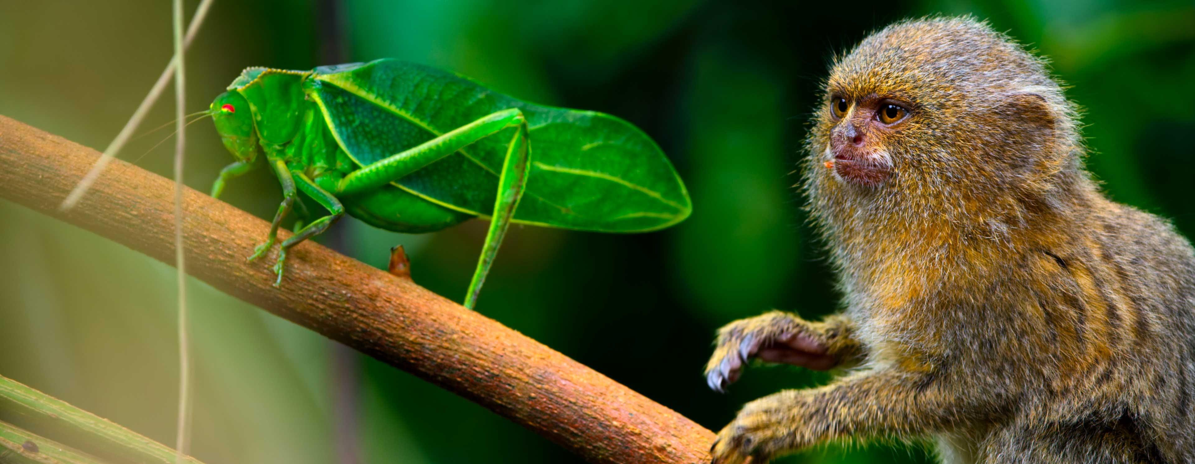 I segreti di Tiny World, le più piccole creature del pianeta in 4K HDR con una qualità davvero eccezionale
