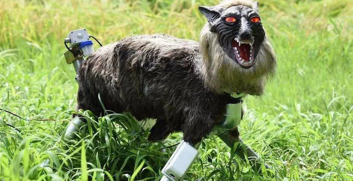 Un lupo robot giapponese scaccia gli orsi che minacciano le città