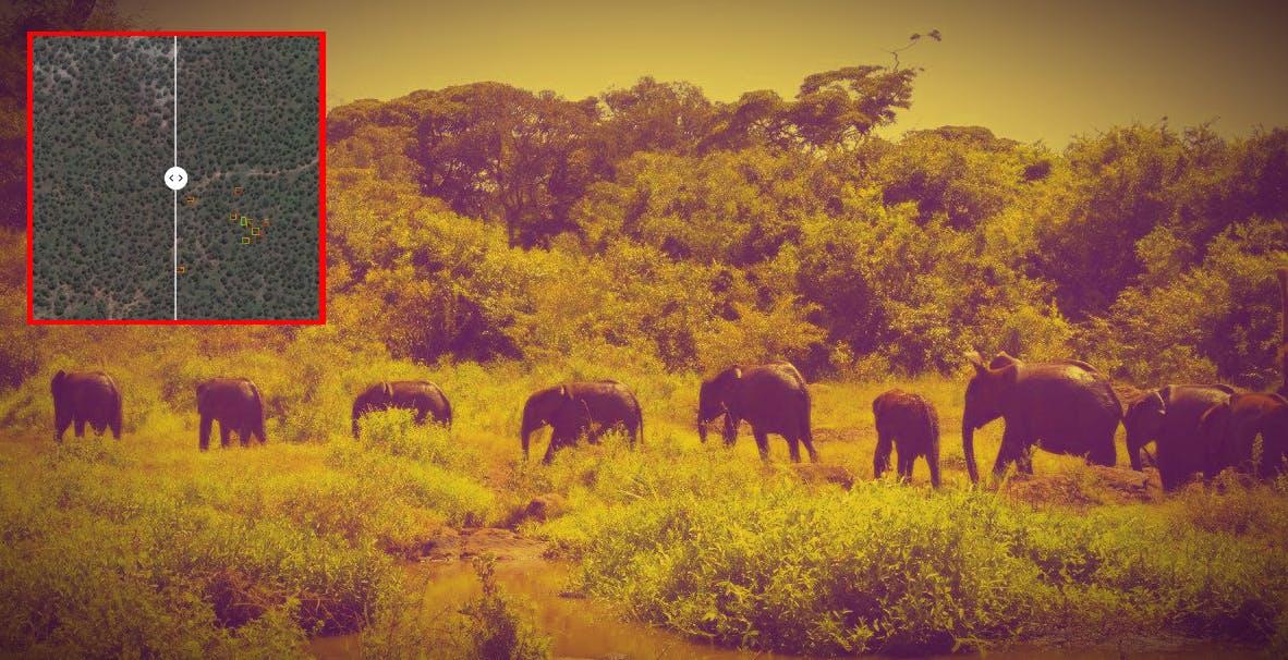 C'è un satellite che grazie all'intelligenza artificiale riesce a contare con precisione gli elefanti che vivono nella savana