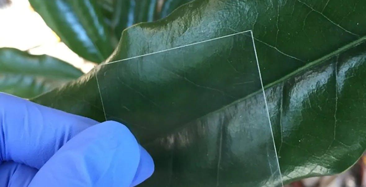 Scienziati inventano il legno trasparente. Lascia passare il 90% della luce e si realizza con facilità