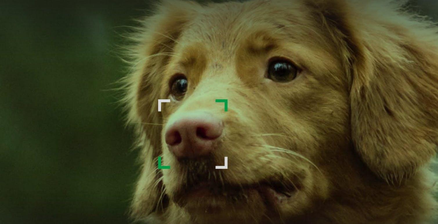 Il naso come le impronte digitali. NOSEiD, una foto al posto del microchip per rintracciare i cani smarriti