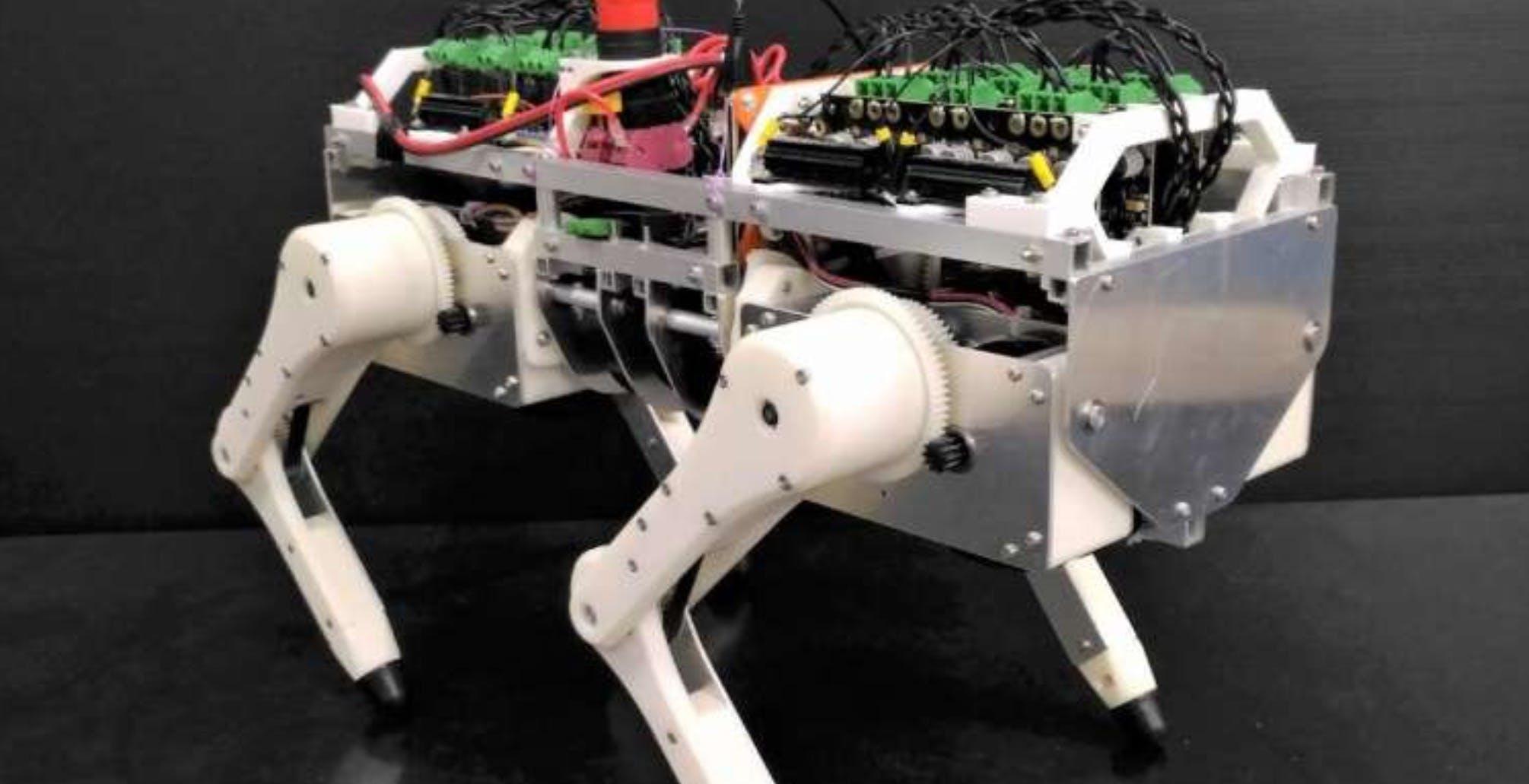 Questo gatto-robot permette di fare ricerca senza sperimentazione sugli animali vivi