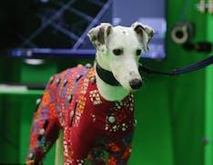 Sviluppata una nuova tecnologia di motion capture... per animali