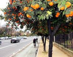 Riciclare il succo d'arancia per dare elettricità a 73.000 case. Il progetto di economia circolare di Siviglia