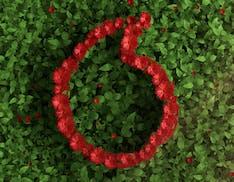 Vodafone, da luglio tutta la rete europea sarà alimentata da fonti rinnovabili